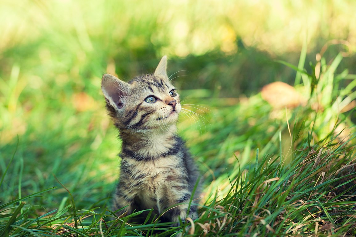 Header kitten voeding-1
